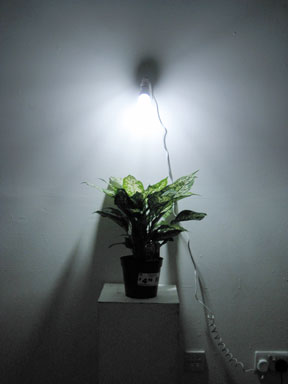 Christine Wong Yap, work in progress, 2009, light, potted plant. dim. var.*