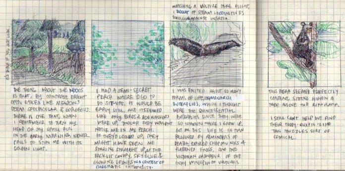 Sights around Byrdcliffe: a brilliant meadow, backlit leaves, turkey vulture, black bear.