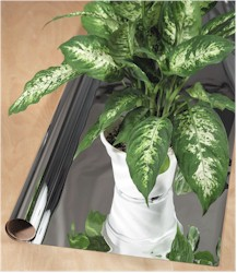 ficus on mylar